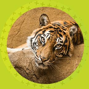 Zoológico de Medellín actividades para hacer